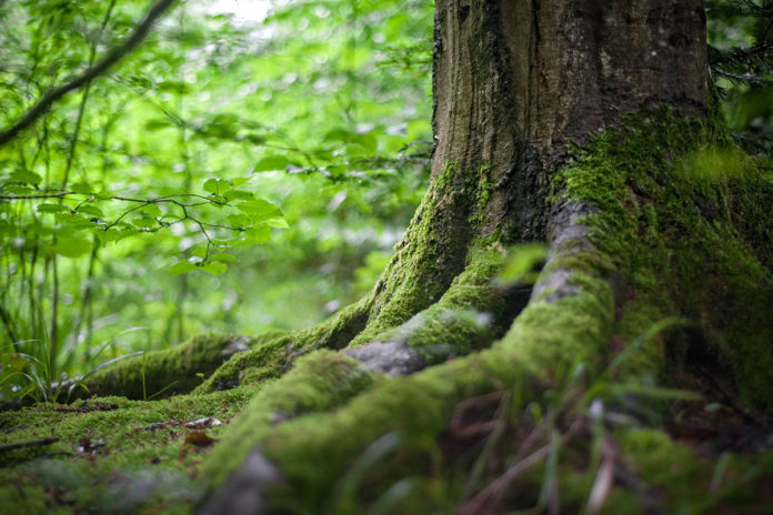 Ecosystem Preservation Eramen Minerals - Executive Chronicles
