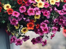 6 Great Flowers Ideal For Hanging Baskets