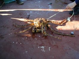 Alaska King Crab Total Information in 2020