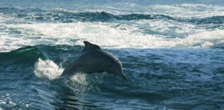 Whale & Dolphin Conservation: How You Can Help