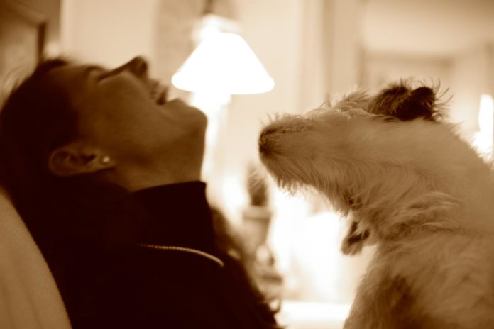 How To Boost Your Dog's Mood