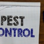 4 Questions to Ask Your Local Pest Control Company Before Hiring Them