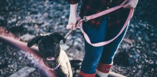 8 Essential Items For Your Pet On A Vacation