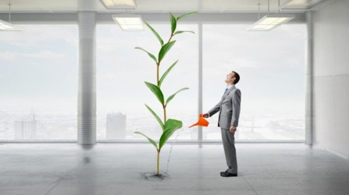 How to Cultivate Business Growth
